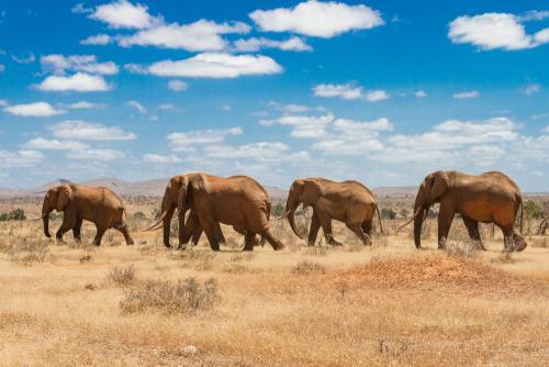 Животный мир 20070