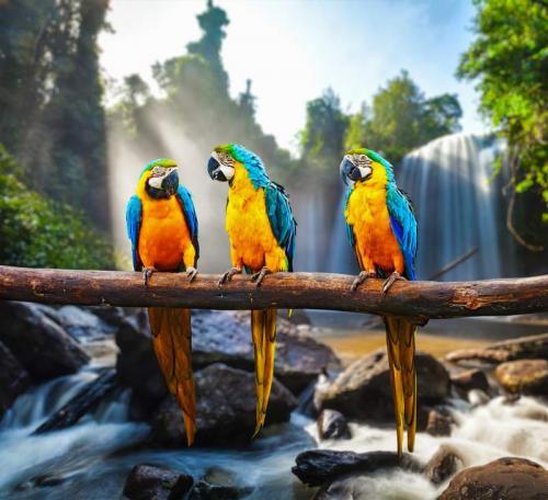 Животный мир 9455