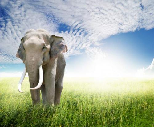 Животный мир 9465