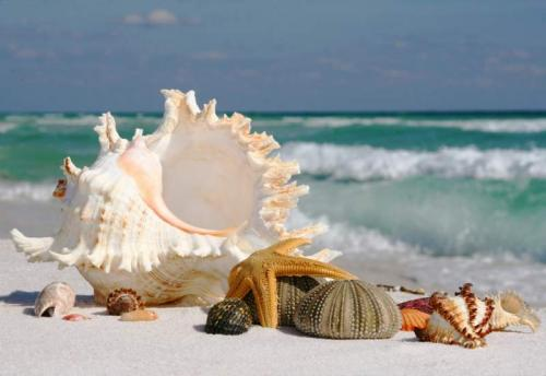 Пляжи 6331