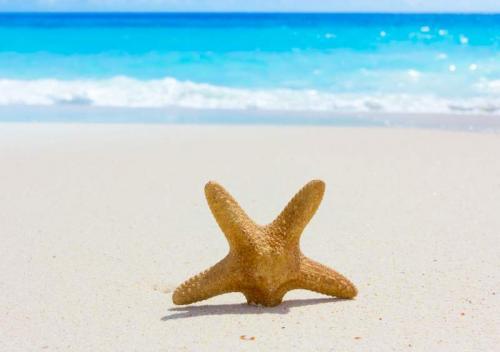 Пляжи 6333