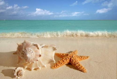 Пляжи 6353