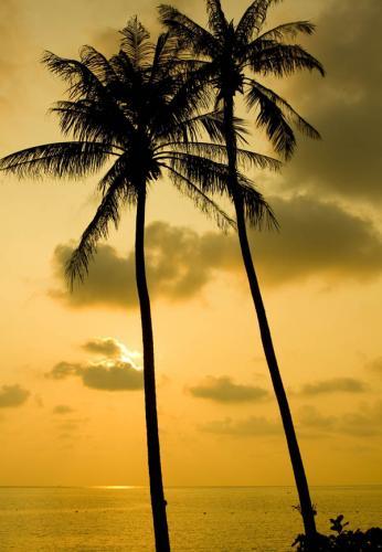 пляжи 453