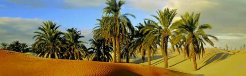 Египет 1004