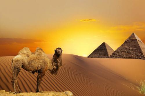 Египет 1704