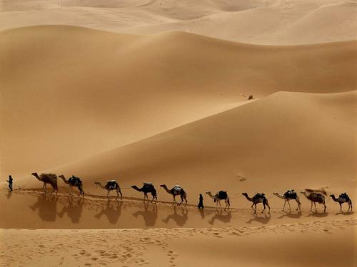 Египет 998