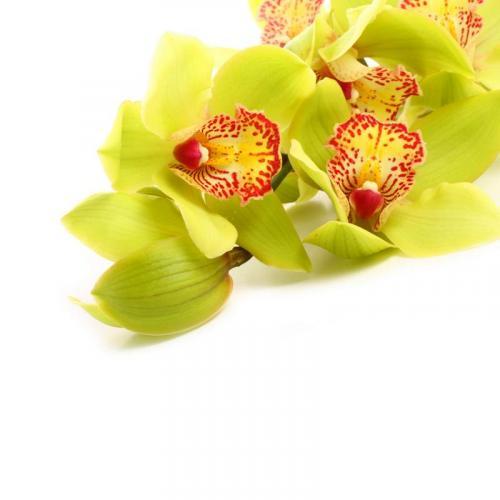 Цветы 5195
