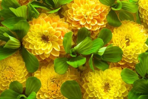 Цветы 5198