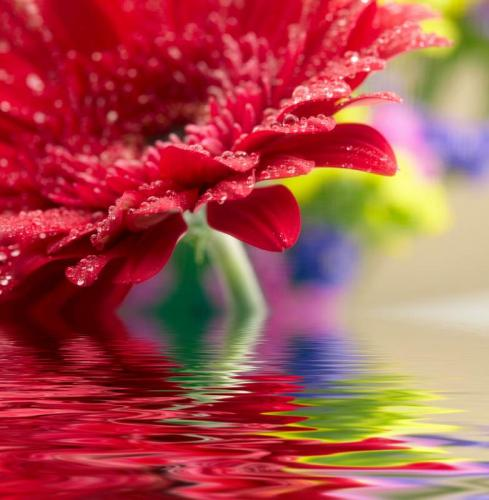 Цветы 5208