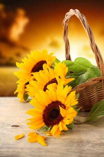 Цветы 5210