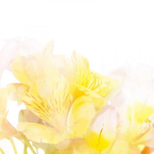 Цветы 5212