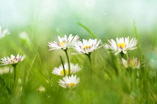 Цветы 5213