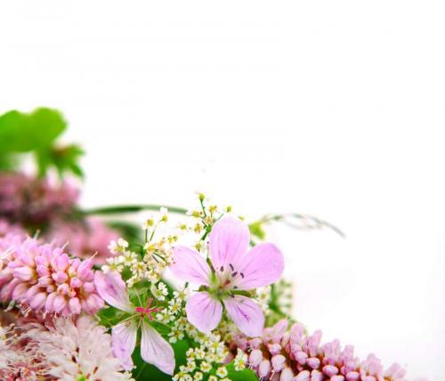 Цветы 5214