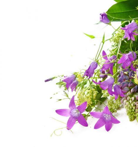 Цветы 5216