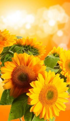 Цветы 5218