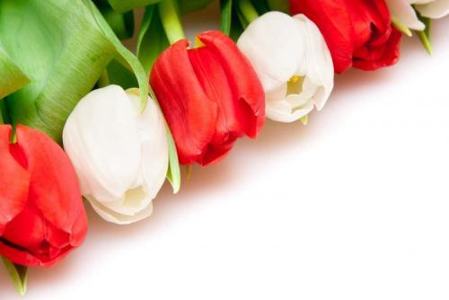 Цветы 5222