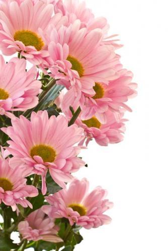 Цветы 5224