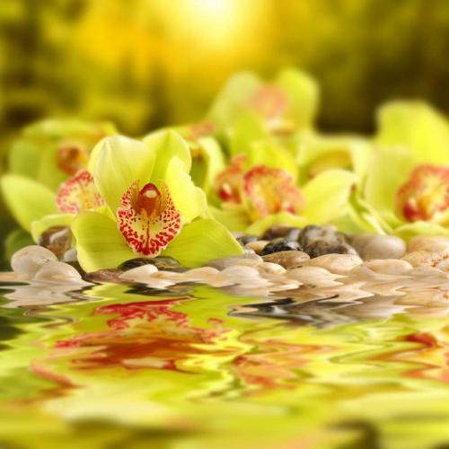 Цветы 5226