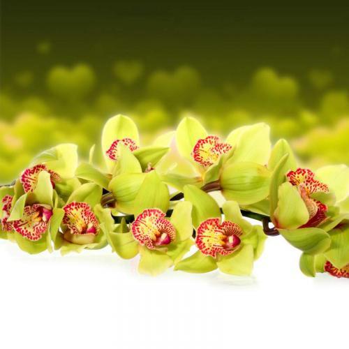 Цветы 5227