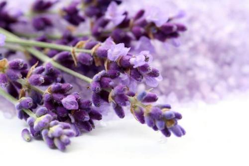 Цветы 5232