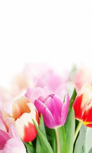 Цветы 5244
