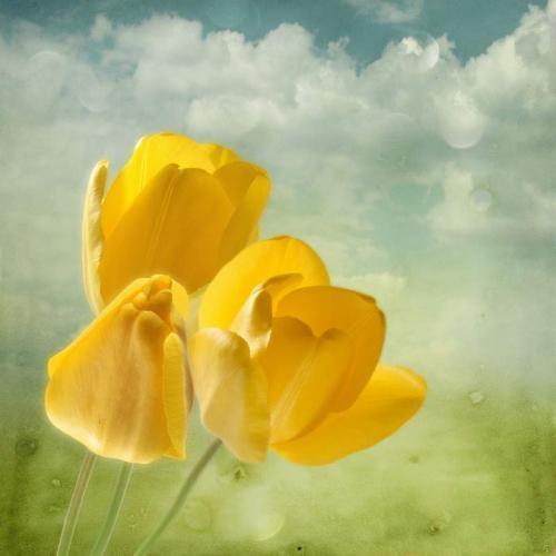 Цветы 5249