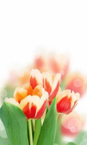 Цветы 5250