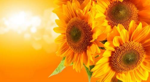 Цветы 5251