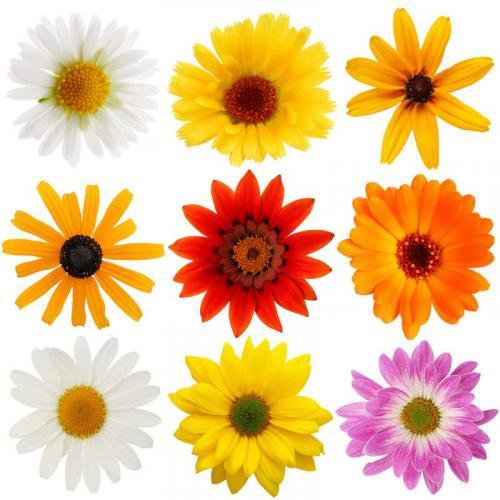 Цветы 5254
