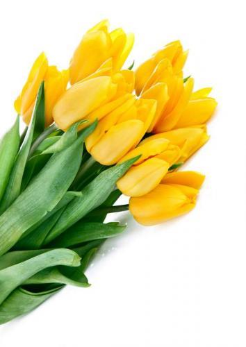 Цветы 5272