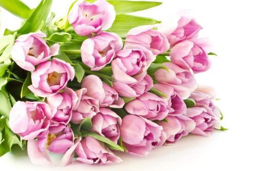 Цветы 5276