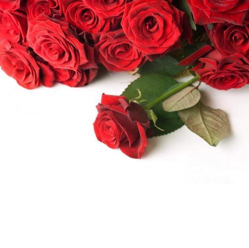 Цветы 5277