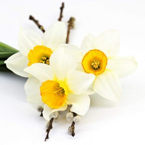 Цветы 5280