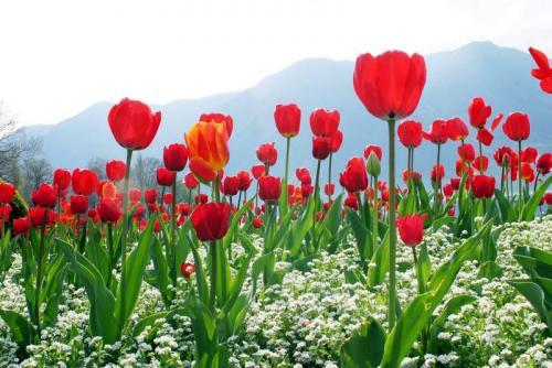 Цветы 5299