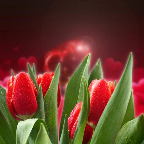 Цветы 5302