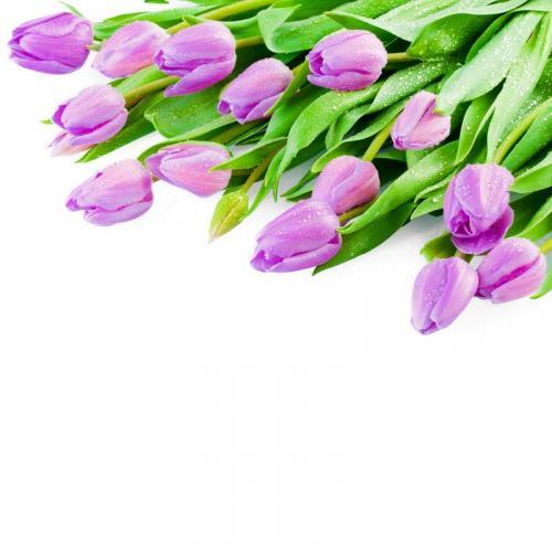 Цветы 5305