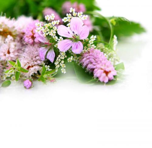 Цветы 5322