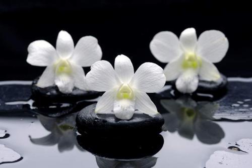 Цветы 5326