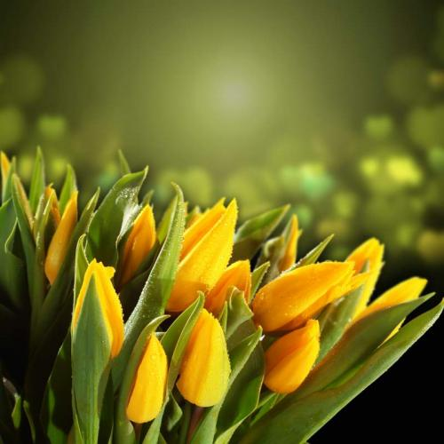 Цветы 5327
