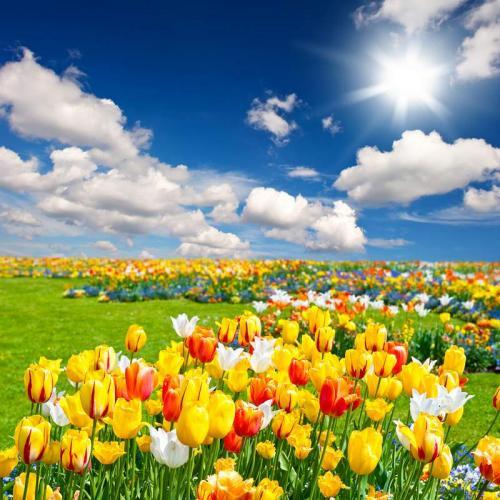 Цветы 5331
