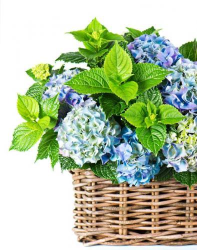 Цветы 5332