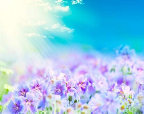 Цветы 5333