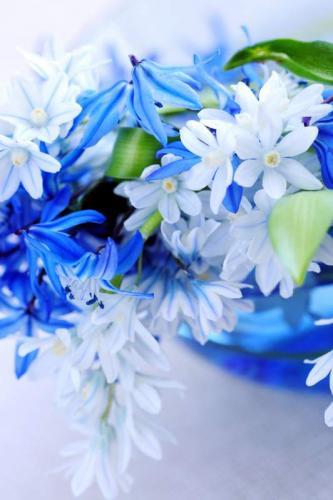 Цветы 5336