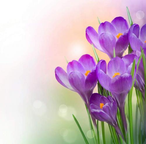Цветы 5337