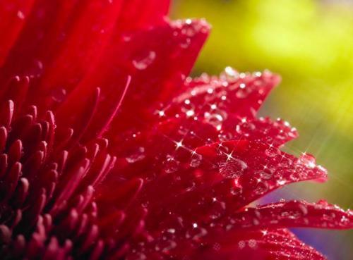 Цветы 5341