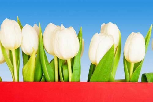 Цветы 5343
