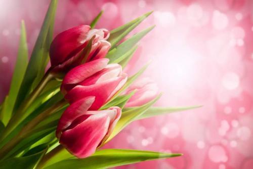 Цветы 5344