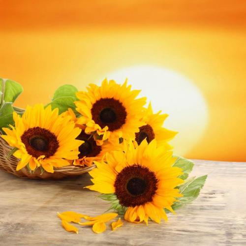 Цветы 5358