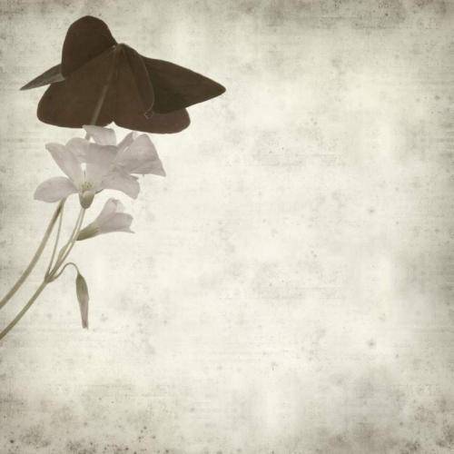Цветы 5361