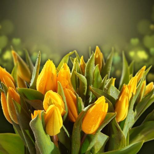 Цветы 5362